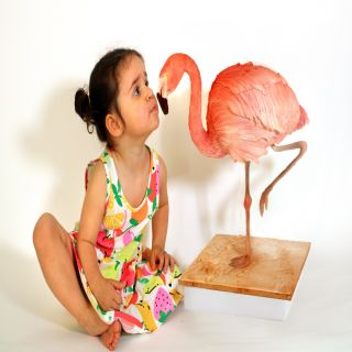 The Cake Illusionist Sculptured Cake Flamingo Online - 12th June 2021